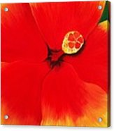 Tropical Hibiscus Painting Acrylic Print by Lisa Bentley