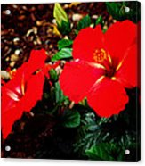 Tropical Hibiscus - Starry Wind 01a Acrylic Print