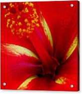 Tropical Hibiscus - Starry Wind 03a Acrylic Print