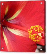 Tropical Hibiscus - Starry Wind 04 Acrylic Print