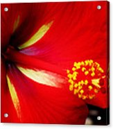 Tropical Hibiscus - Starry Wind 04a Acrylic Print