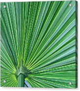 Tropical Leaf Acrylic Print