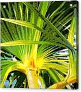 Tropical  Leaves Acrylic Print
