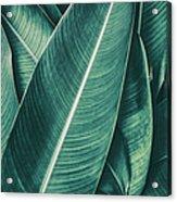 Tropical Palm Leaf, Dark Green Toned Acrylic Print