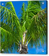 Tropical Palm Portrait Acrylic Print