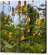 Tropical Plants Acrylic Print