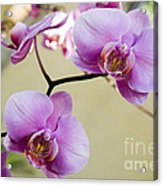 Tropical Radiant Orchid Flowers Acrylic Print