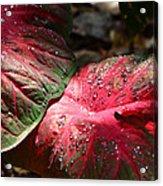 Tropical Rain - Botanical Art By Sharon Cummings Acrylic Print