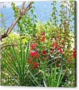Tropical Red Against Cool Mountain Mists Acrylic Print