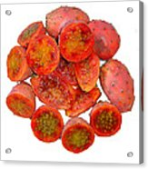 Tropical Red Prickly Pear Fruit  Acrylic Print