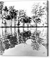 Tropical Reflections Acrylic Print