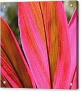 Tropical Acrylic Print