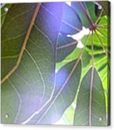 Tropical Shade Acrylic Print