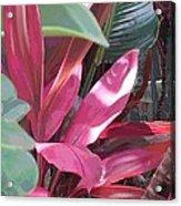Tropical Spice Acrylic Print