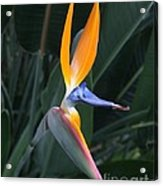 Tropical Touch Acrylic Print