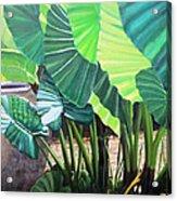 Tropical Translucence Acrylic Print
