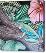 Tropical Tree Frog Acrylic Print