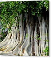 Tropical Tree Acrylic Print