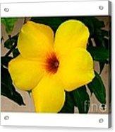 Tropical Yellow Blossom Acrylic Print