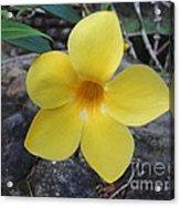 Tropical Yellow Flower Acrylic Print