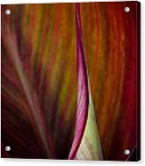 Tropicana Color Acrylic Print