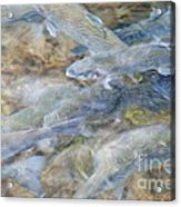 Trout Pond Abstract Acrylic Print