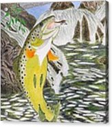 Trout Stream In May Acrylic Print by Gerald Strine