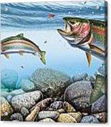 Trout Stream Acrylic Print