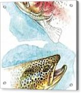 Trout Study Acrylic Print