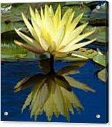 Truth Reflected Acrylic Print