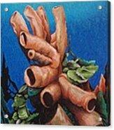 Tube Coral Acrylic Print