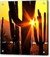 Tucson Sunset Acrylic Print