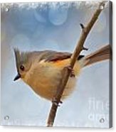 Tufted Titmouse - Digital Paint II With Frame Acrylic Print