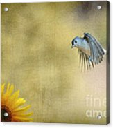 Tufted Titmouse Flying Over Flower Acrylic Print