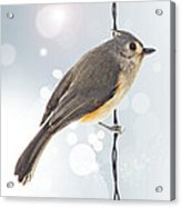 Tufted Titmouse Twinkle Acrylic Print by Bill Tiepelman