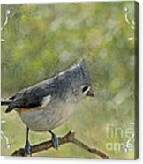 Tufted Titmouse With Decorations II Acrylic Print