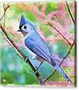 Tufted Titmouse With Spring Booms - Digital Paint II Acrylic Print