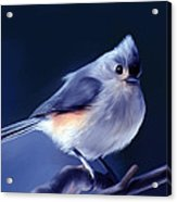 Tufty The Titmouse Acrylic Print