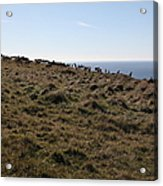 Tules Elks Of Tomales Bay California - 5d21276 Acrylic Print by Wingsdomain Art and Photography
