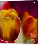 Tulip-7016-fractal Acrylic Print