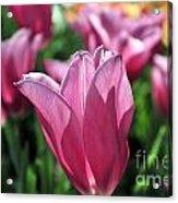 Tulip Angel Acrylic Print