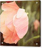 Tulip Blush Acrylic Print