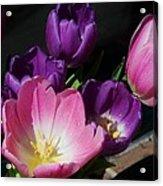 Tulip Bouquet 1 Acrylic Print by Marcus Dagan