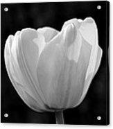 Tulip Bw Acrylic Print