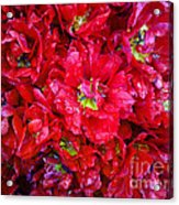 Tulip Festival - 21 Acrylic Print