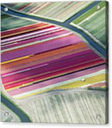 Tulip Fields, Aerial View, South Acrylic Print