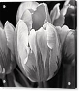 Tulip Flowers Black And White Acrylic Print