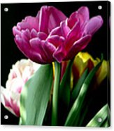 Tulip For Easter Acrylic Print