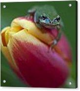 Tulip Frog Acrylic Print