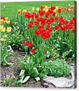 Tulip Gardenscape Acrylic Print